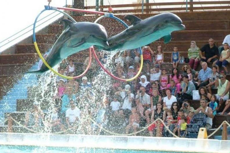 Warna z delfinarium