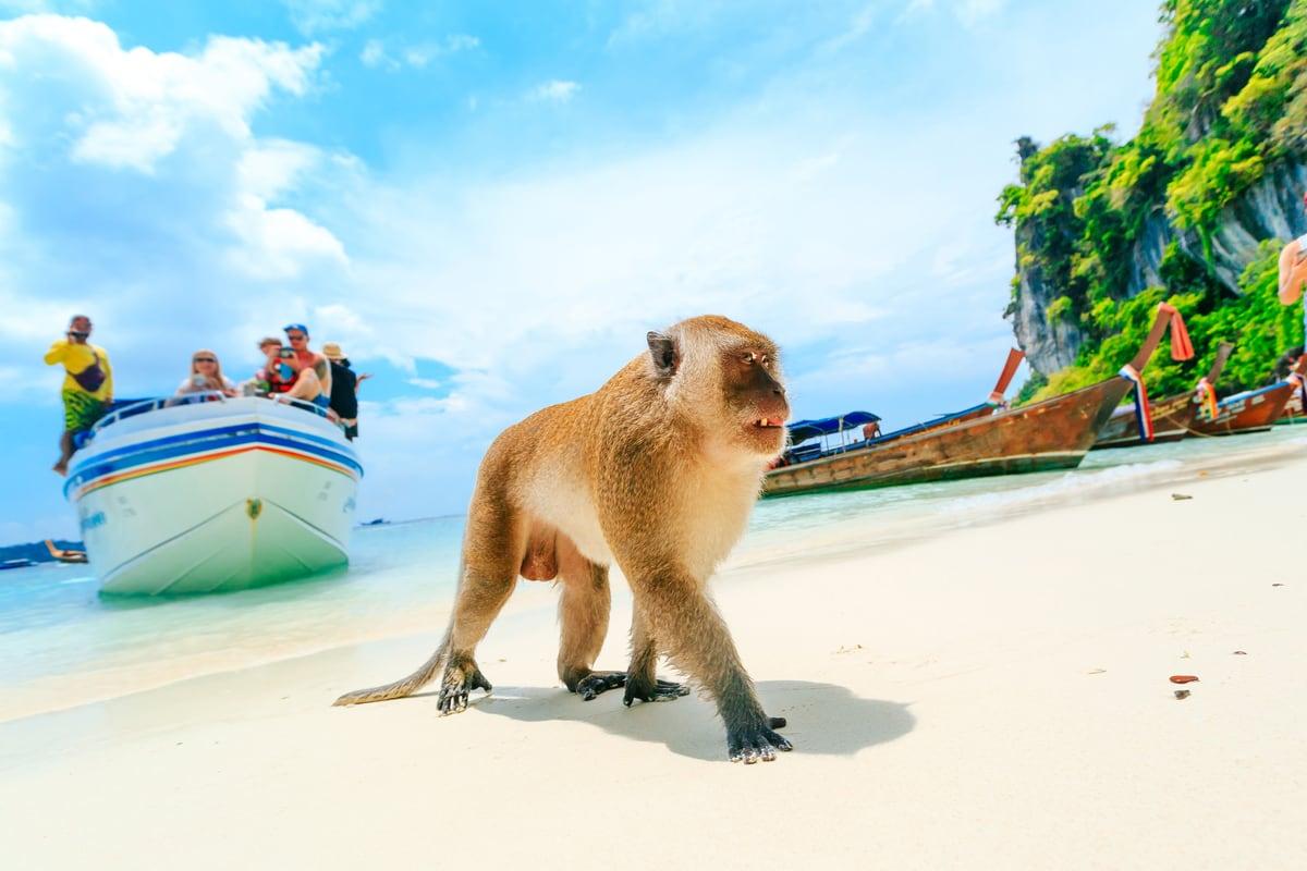 tajlandia phi phi maly